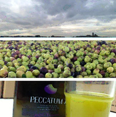 SIMBIONATUR, producció biodinàmica d'oli oliva verge extra.