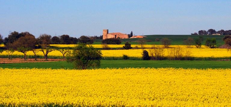 Castellmeià, municipi de Torrefeta i Florejacs. Segarra (Maria Josep Jové)