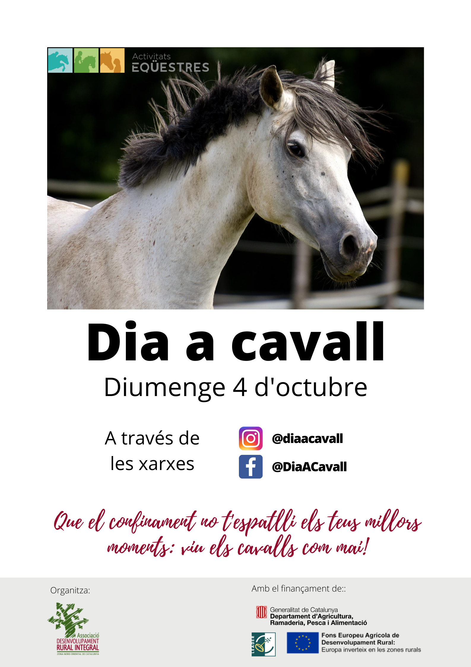 Cartell-Dia-cavall.png
